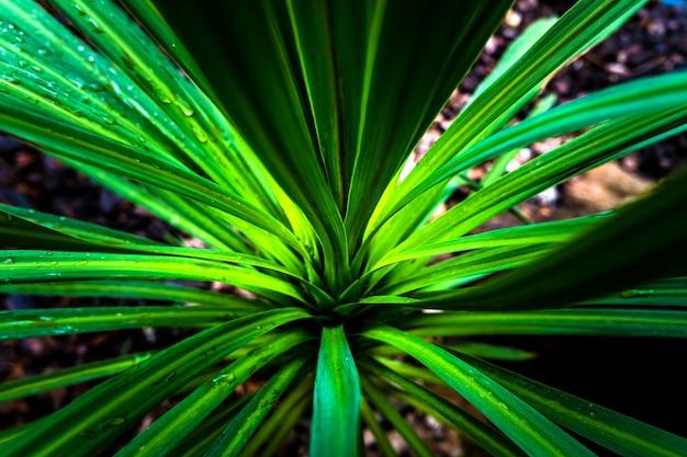 Szczegół tropikalna palmowa roślina po deszczu.
