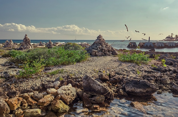 Szczegół widok plaży puerto aventuras w meksyku z niektórymi mewami latającymi z morza na wybrzeże.
