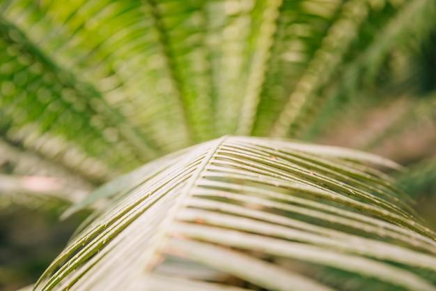 Szczegół zielona palma opuszcza tło