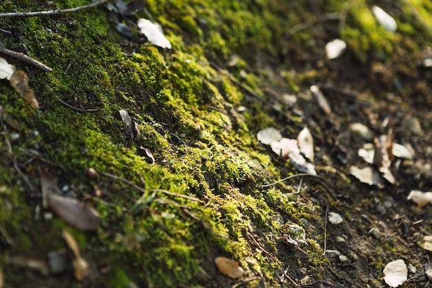 Szczegół zielone rośliny i mech na kamieniu w lesie
