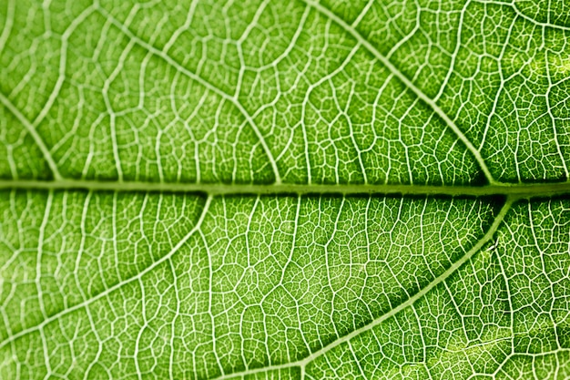 Szczegół zielony liść