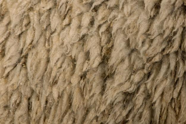 Szczegółowa wełna owcza arles merino