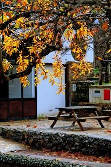 Szczegółowy widok żółtych liści na drzewie i stolik na lunch w parku.