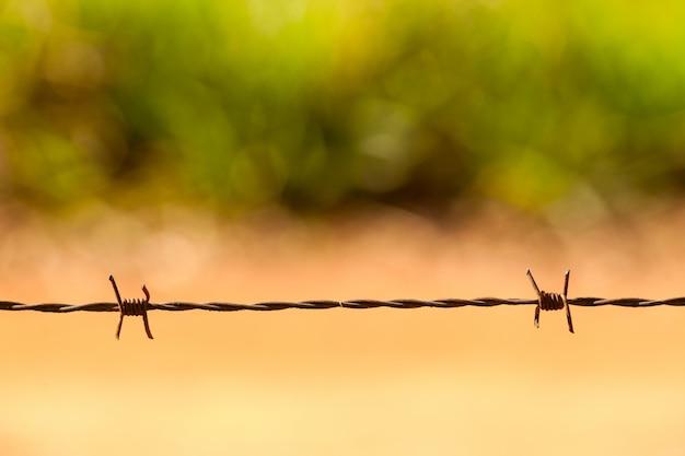Szczegóły drutu kolczastego - drut kolczasty makro