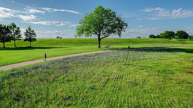 Szczegóły krajobrazu parku wiosennego słonecznego zielonego drzewa