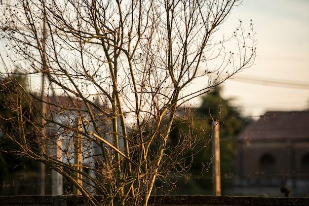 Szczegóły nagich gałęzi w czasie zachodu słońca