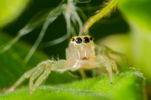 Szczegóły owada na liściu