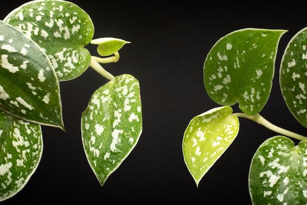 Szczegóły tekstur roślin w pomieszczeniach