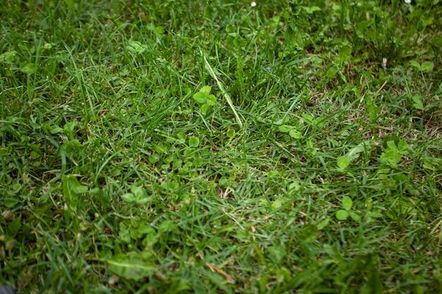 Szczegóły tekstury zielonej trawy wykonane za pomocą obiektywu makro