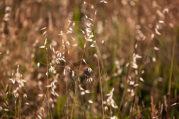 Szczegóły uprawy pola lucerny wykonane o zachodzie słońca