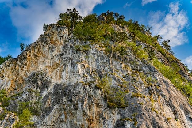 Szczegóły w górach tara w serbii