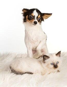 Szczeniak i kotek na białym tle