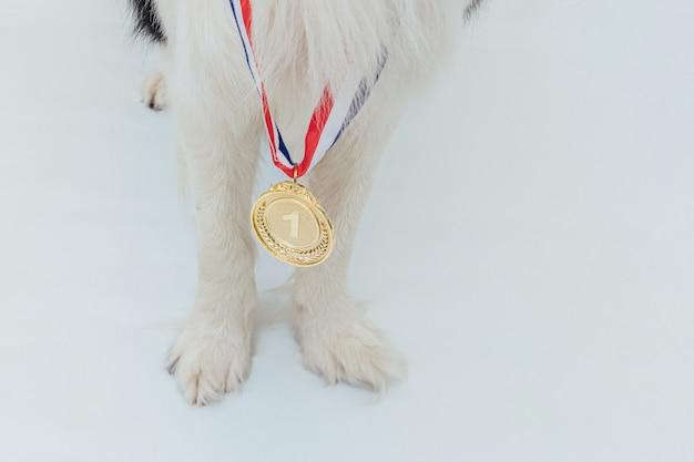 Szczeniak pwas border collie z medalem zwycięzcy lub mistrza złote trofeum na białym tle ...