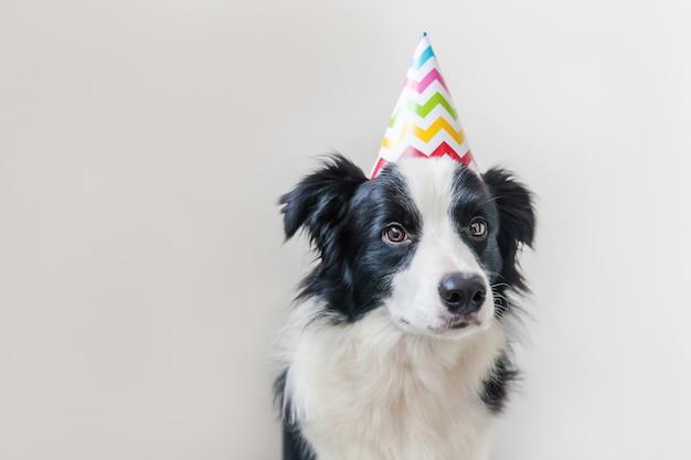 Szczeniak rasy border collie w kapeluszu urodziny na białym tle