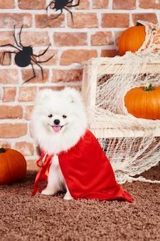 Szczeniak ubrany w kostium na halloween