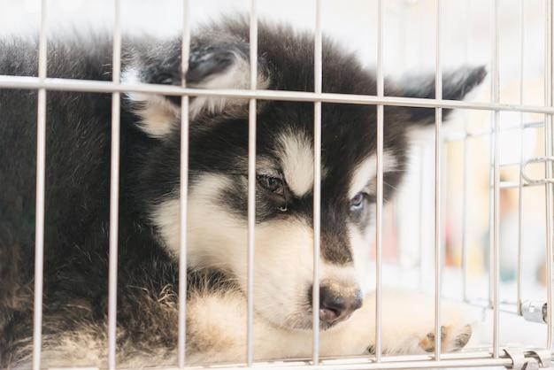 Szczeniak w klatce na sprzedaż na rynku zwierząt domowych, ludzie kupują zwierzęta ze sklepu zoologicznego