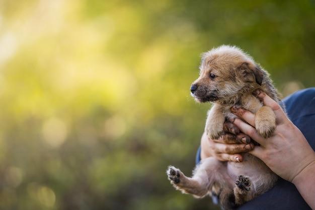 Szczeniak w rękach rolnika. rescue animal. bezdomny pies.