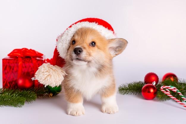 Szczeniak walijski corgi w czapce świętego mikołaja z prezentami na świątecznym tle