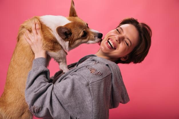 Szczęśliwa dziewczyna w szarej bluzie z kapturem bawi się corgi na różowym tle. pies liże policzek szczęśliwej kobiety. pani w świetnym nastroju trzyma na białym tle zwierzaka domowego