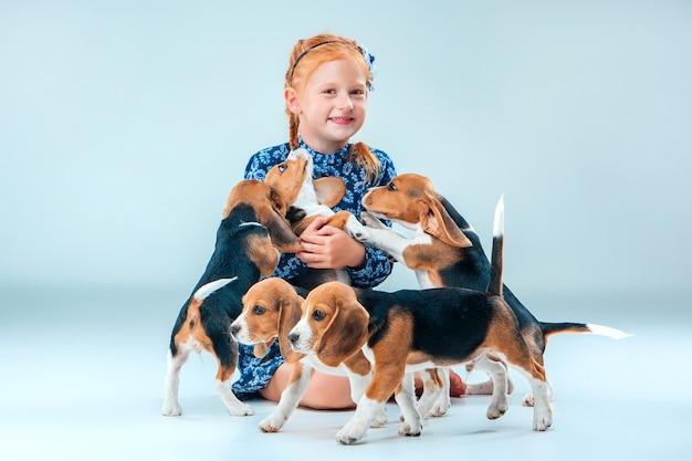 Szczęśliwa dziewczynka i szczenięta beagle na szarej ścianie