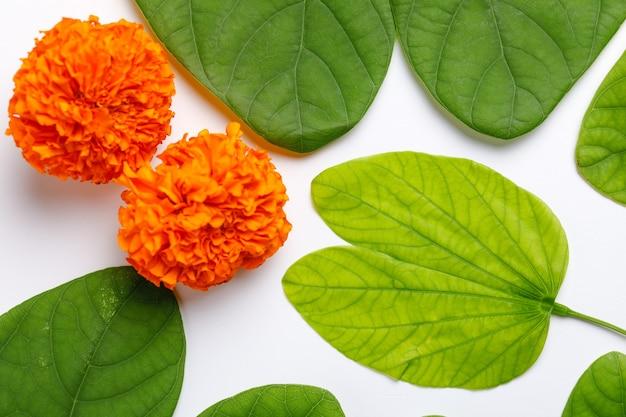 Szczęśliwa kartka z życzeniami dasera, zielony liść i ryż, indyjski festiwal dasera