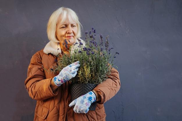 Szczęśliwa kobieta w wieku dbanie o doniczkową lawendę. starsza kobieta trzyma garnek z kwiatami