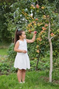 Szczęśliwa mała dziewczynka z jabłkami w sadzie
