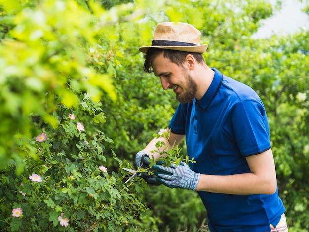 Szczęśliwa męska ogrodniczka przycina zielonej rośliny