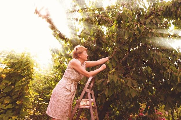 Szczęśliwa ogrodniczka zbiera i zbiera nowe plony z drzewa stojącego na drabinie