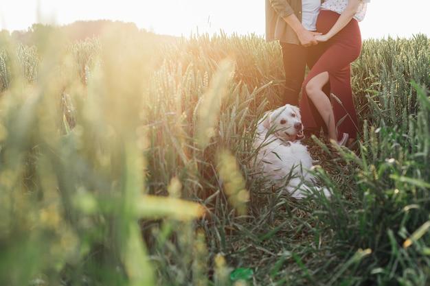 Szczęśliwa para w przyrodzie w promieniach zachodzącego słońca z psem. kobieta w ciąży . rodzina i ciąża. miłość i czułość. szczęście i spokój. dbanie o nowe życie. natura i zdrowie.