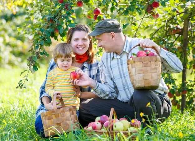 Szczęśliwa rodzina zbiorów czerwonych jabłek