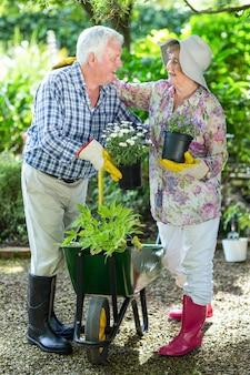 Szczęśliwa starsza para trzyma kwiatów garnki