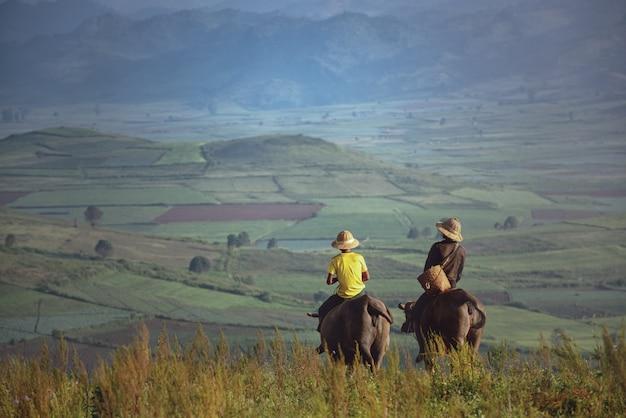 Szczęśliwe chłopiec jedzie wodnego bizonu, myanmar