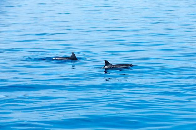 Szczęśliwe delfiny w wodzie