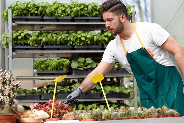 Szczęśliwe męskie pepiniera pracownika arymażu rośliny w szklarni