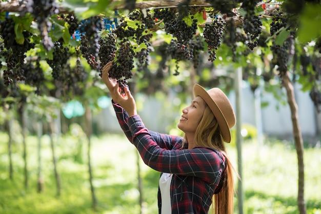 Szczęśliwe młode kobiety ogrodniczki mienia gałąź dojrzały błękitny winogrono