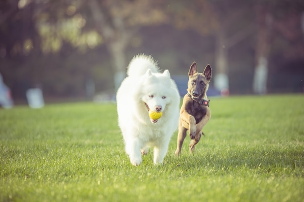 Szczęśliwe psy domowe grają na trawie