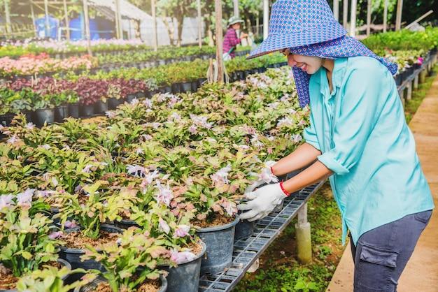 Szczęśliwego pracownika azjatykcia kobieta z flancowaniem kwitnie dbanie kwiaty w szklarni.