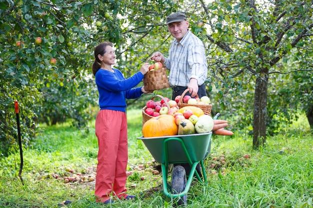 Szczęśliwi dorośli mężczyźni i kobiety z wielkimi zbiorami w ogrodzie na świeżym powietrzu