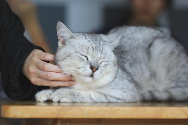 Szczęśliwy kotek lubi głaskanie ręką kobiety, miłość do zwierząt