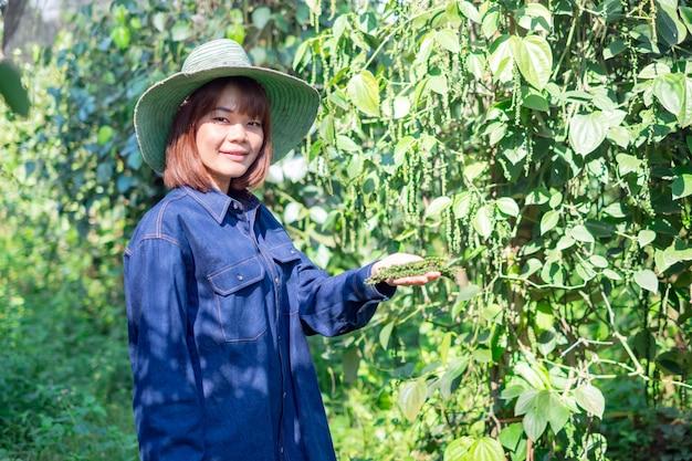 Szczęśliwy młody asia kobiety średniorolny żniwo dudziarza nigrum pieprz w gospodarstwie rolnym