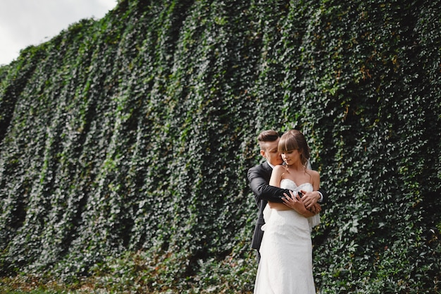 Szczęśliwy młody państwo młodzi w ich dniu ślubu. pan młody i panna młoda przytulanie w przedniej ścianie z zielonym bluszczem