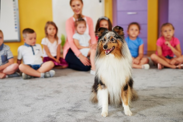 Szczęśliwy owczarek szetlandzki w przedszkolu