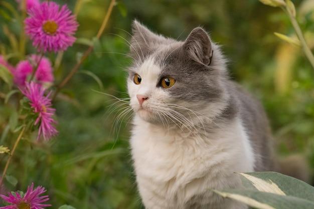 Szczęśliwy piękny kot stoi w ogrodzie wśród drzew