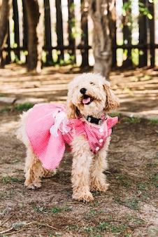 Szczęśliwy pies ma zabawę w parku