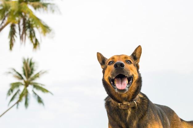 Szczęśliwy pies na plaży.