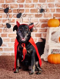 Szczęśliwy pies w stroju diabła