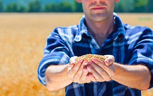 Szczęśliwy rolnik posiadający dojrzałe ziarna pszenicy