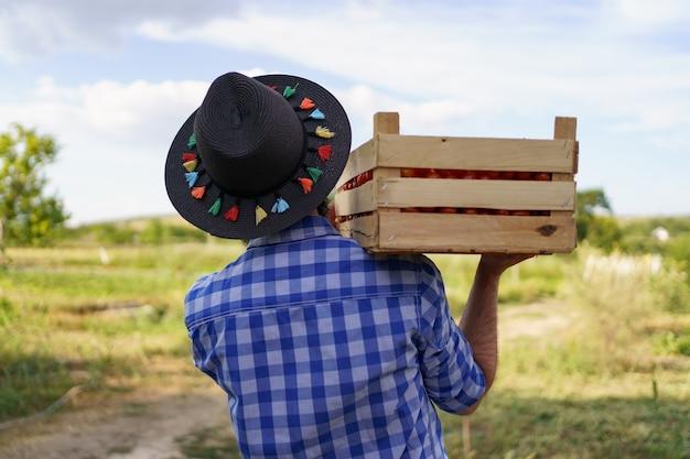 Szczęśliwy rolnik trzymający zebrane eko pomidory spacerujący z pełną skrzynią na ramionach