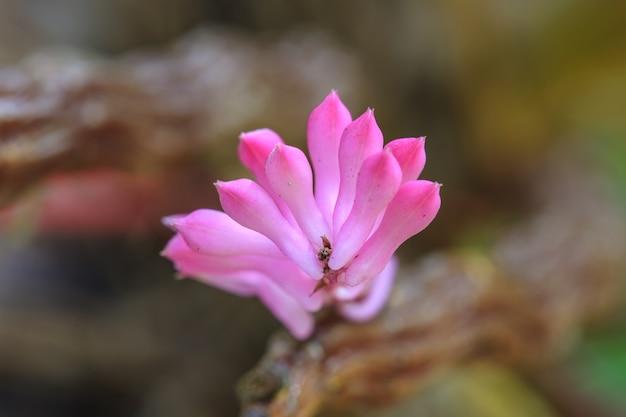 Szczoteczka do kwiatów orchidea lub dundrobium secundum